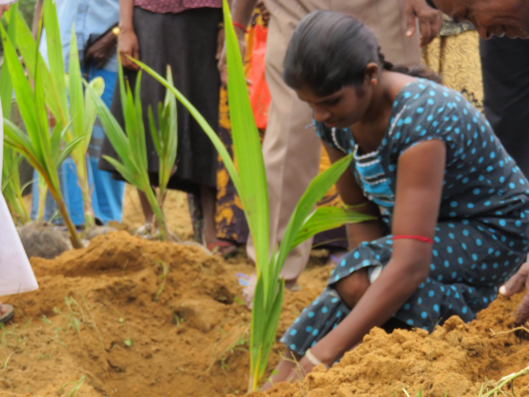 Trees planted in remembrance of Maaveerar Naal   Tamil Guardian
